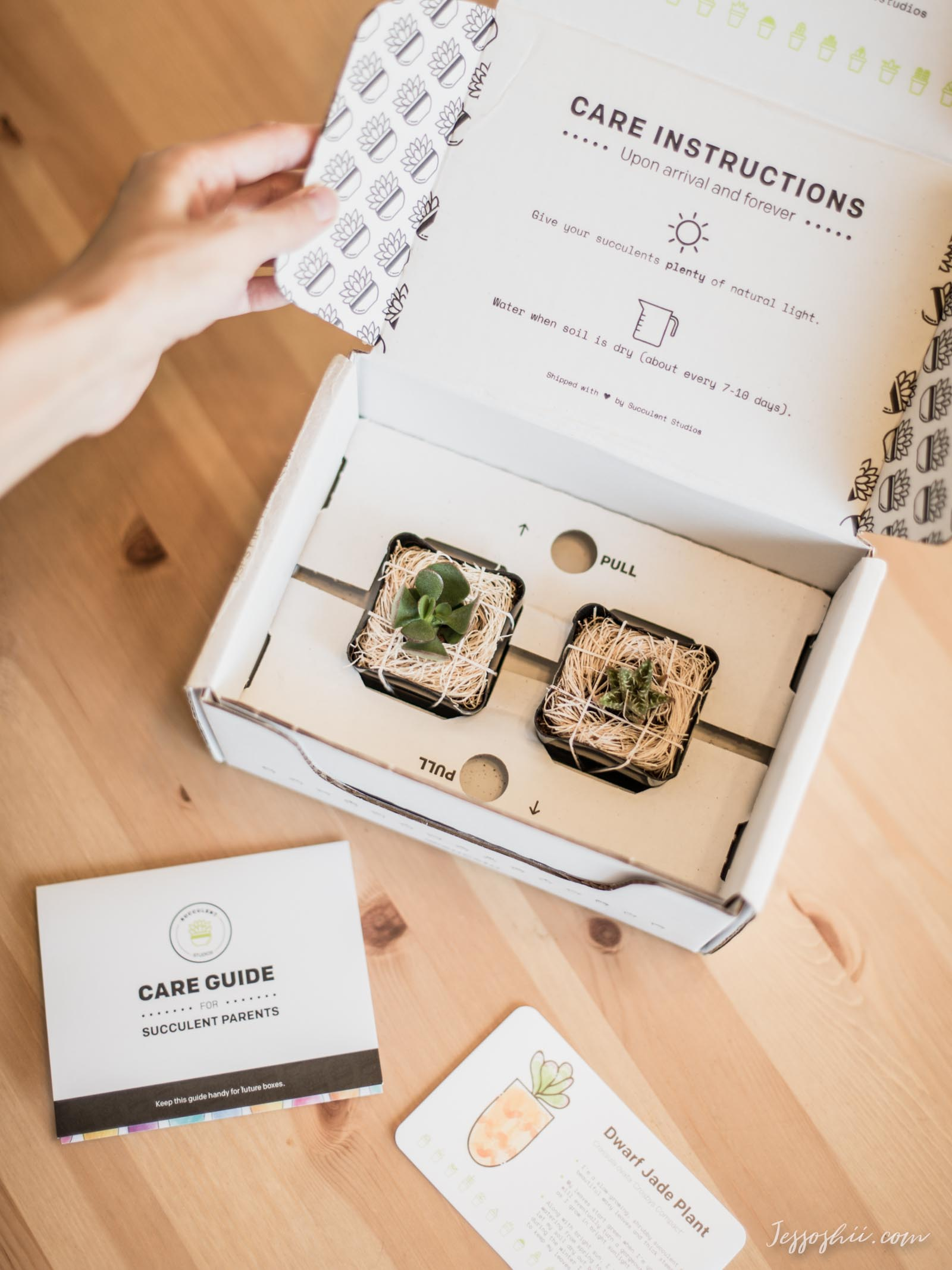 succulent subscription boxes 1